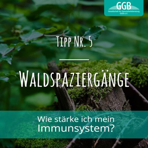 Corona Immunsystem Tipp05 Waldspaziergänge